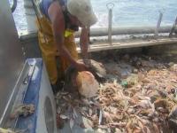 Spaniolii fac haine ecologice din deseuri reciclate din mare.