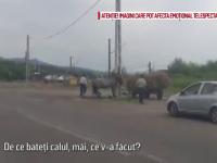 Doi barbati din judetul Bacau au fost filmati in timp ce bateau cu bestialitate un cal. Cu ce le gresise animalul