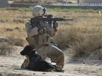 Parada militara emotionanta pentru un caine al armatei SUA bolnav de cancer. Sute de oameni i-au spus adio animalului-erou