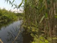 Tot mai mulți turiști vin să admire cea mai tânără deltă din Europa: Delta Neajlovului