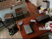 Ce a făcut un tânăr când s-a trezit cu o familie de urşi cotrobăindu-i în frigider