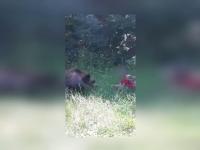Momentul în care o fetiță hrănește un urs, pe Transfăgărășan. Reacția unui turist