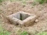 Metoda ingenioasă prin care a fost salvat un pui de urs căzut într-un canal