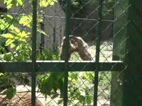 Doi urşi de la grădina zoologică din Galaţi s-au luat la bătaie pentru o îngheţată