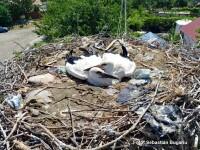 Gunoaiele românilor au ajuns în cuiburile berzelor. Ce au descoperit biologii, revoltați
