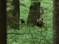 Mama și fetița ei, atacate de urs în Vrancea. Cele două sunt internate în spital