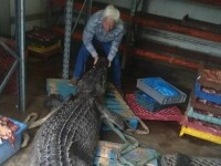 Descoperirea făcută de un fermier în stomacul unui crocodil pe care l-a îngrijit ani de zile