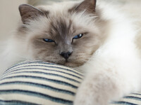 Cruzime fără limite. A ucis 3 pisici, după ce le-a băgat în mașina de spălat. VIDEO șocant