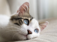 O femeie de 80 de ani a murit, după ce a fost linsă de pisică