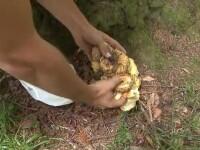 Șase copii s-au intoxicat cu ciupercile culese de ei în tabără, în Brașov