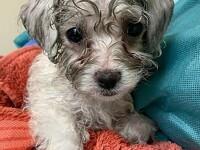 """Câini aduși ilegal din România în Marea Britanie pentru fi vânduţi în timpul izolării: """"Sunt ținuți în condiții groaznice"""""""
