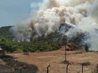 Incendii de vegetație grave în Grecia. 57 de focare în 24 de ore