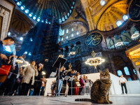 Sfânta Sofia, prima zi de rugăciuni pentru musulmani. Ce se va întâmpla cu celebra pisică Gli