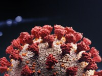 Studiu: Pacienţii vindecaţi de COVID-19 pot avea încă virusul în sistemul digestiv