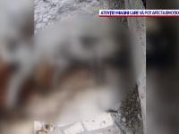 Imagini șocante în stațiunea Lacu Sărat. Mai mulți câini au fost găsiți morți în parcul care împrejmuiește zona de promenadă