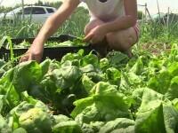 Producătorii de legume și fructe s-au mutat pe internet ca să-și vândă marfa. Există grupuri și platforme dedicate