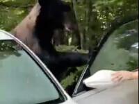 Mașină vandalizată de un urs brun, într-un parc natural din SUA. Cum a ieșit din confruntarea cu fiara  VIDEO
