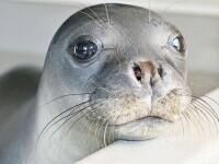 """Indignare după ce foca-mascotă Kostis a fost ucisă cu harponul în Grecia. """"Răutatea şi prostia umană nu au limite"""""""