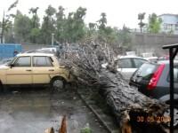 Apa trece, copacii inca mai cad!