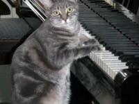 Nora, celebra pisica amatoare de muzica la pian, are o piesa noua!