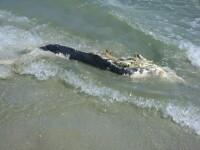 IMAGINI SOCANTE la malul marii! Delfin gasit putrezit pe plaja!