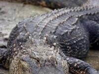 Ce a facut un barbat din Uganda dupa ce un crocodil i-a ucis sotia, insarcinata in 8 luni. Localnicii il considera un erou