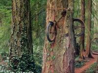 Copacii care