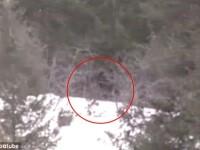 Cea mai clara dovada a existentei lui Bigfoot. Monstrul gigant, filmat intr-o padure din SUA. VIDEO