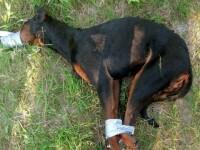 Un orasel linistit din Germania, revoltat de cum a fost ucis un caine. Stapanii risca inchisoarea