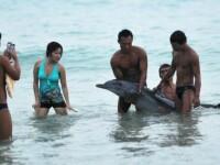 Un delfin din China a murit dupa ce a fost scos din apa de turistii care voiau sa-si faca poze cu el