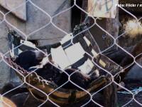 S-a uitat peste gard la vecin si a vazut un urs dormind in hamac. Orasul unde te poti trezi cu Mos Martin in curte. VIDEO