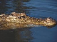 Lupta pe viata si pe moarte intre un crocodil si un rechin. Imaginile surprinse de pe un vas de croaziera din Australia