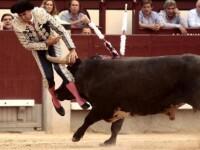 Groaza in timpul unei coride, la Madrid: Un toreador a ramas fara un testicul dupa ce taurul l-a strapuns cu cornul. VIDEO