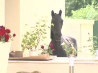 Explicatia lui Traian Basescu pentru calul, ursul si vaca din curtea noii sale vile din Primaverii