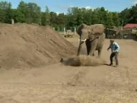 Un barbat din Germania a fost atacat si ucis de un elefant, pe strada. Animalul evadase de la un circ