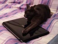 Ce se intampla daca te uiti la prea multe clipuri amuzante cu pisicute. Efectul