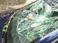 Doua autoturisme distruse de un copac rupt de vant, la Bacau.