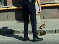 Un politist din Cluj a oprit traficul pentru o familie de rate. Gestul sau i-a adus admiratia si respectul tuturor