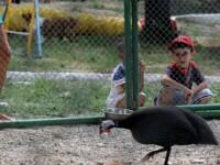 Gradina zoologica dintr-un mare oras din Romania a fost INCHISA. Ce au descoperit inspectorii in tarcurile animalelor
