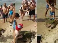 Scene de cruzime pe o plaja din Beirut. Turistii s-au urcat pe o testoasa si au lasat-o sa moara, ca sa isi faca selfie cu ea