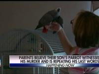 Un papagal vorbitor ar putea fi citat ca martor intr-un proces de crima, dupa ce a vazut cum a fost impuscat stapanul