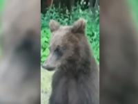 S-au trezit cu ursul la geamul mașinii, pe Transfăgărășan. Ce a urmat