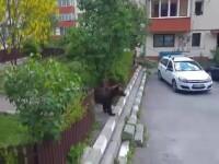 urs la bloc