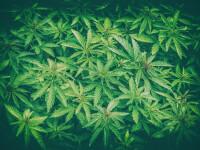 Enoriaşi drogaţi la slujbă. De ce a folosit un preot marijuana în loc de tămâie