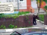 Apartament ieftin, în zonă verde, cu urşi în curte