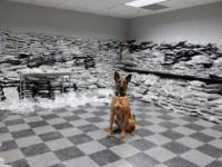 Descoperirea unui câine-polițist într-un camion de mare tonaj. A primit o înaintare în grad