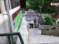 Întâlniri periculoase cu urșii. Un bărbat a rămas fără un picior, în Curtea de Argeș