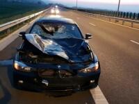 Accident pe Autostrada A10, între o mașină și un cerb. Autovehiculul a fost avariat