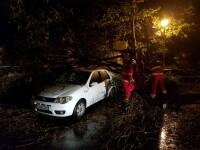 Cod roșu de vânt în Dolj. Patru mașini avariate de copaci doborâți