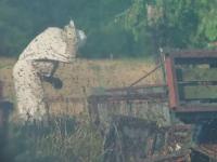 Accident straniu. Zeci de mii de albine au invadat autostrada